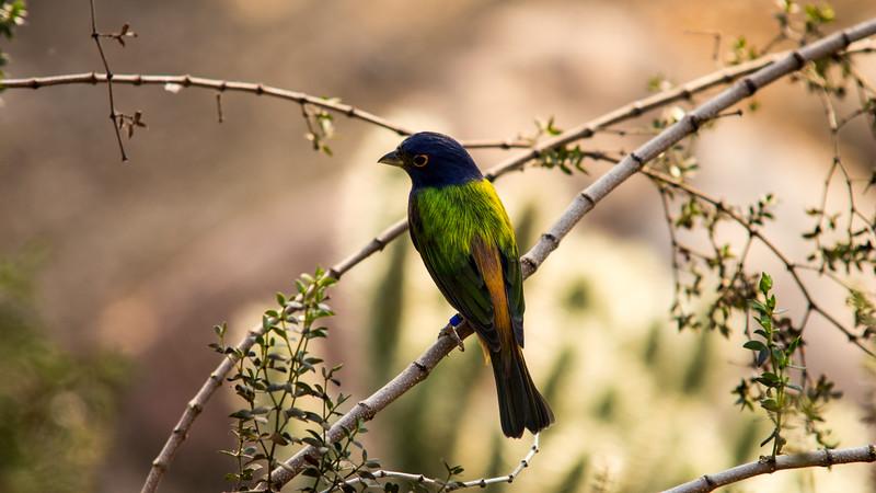Little bird at Burgers' Zoo