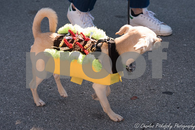 Burlingame Pet Parade 2017