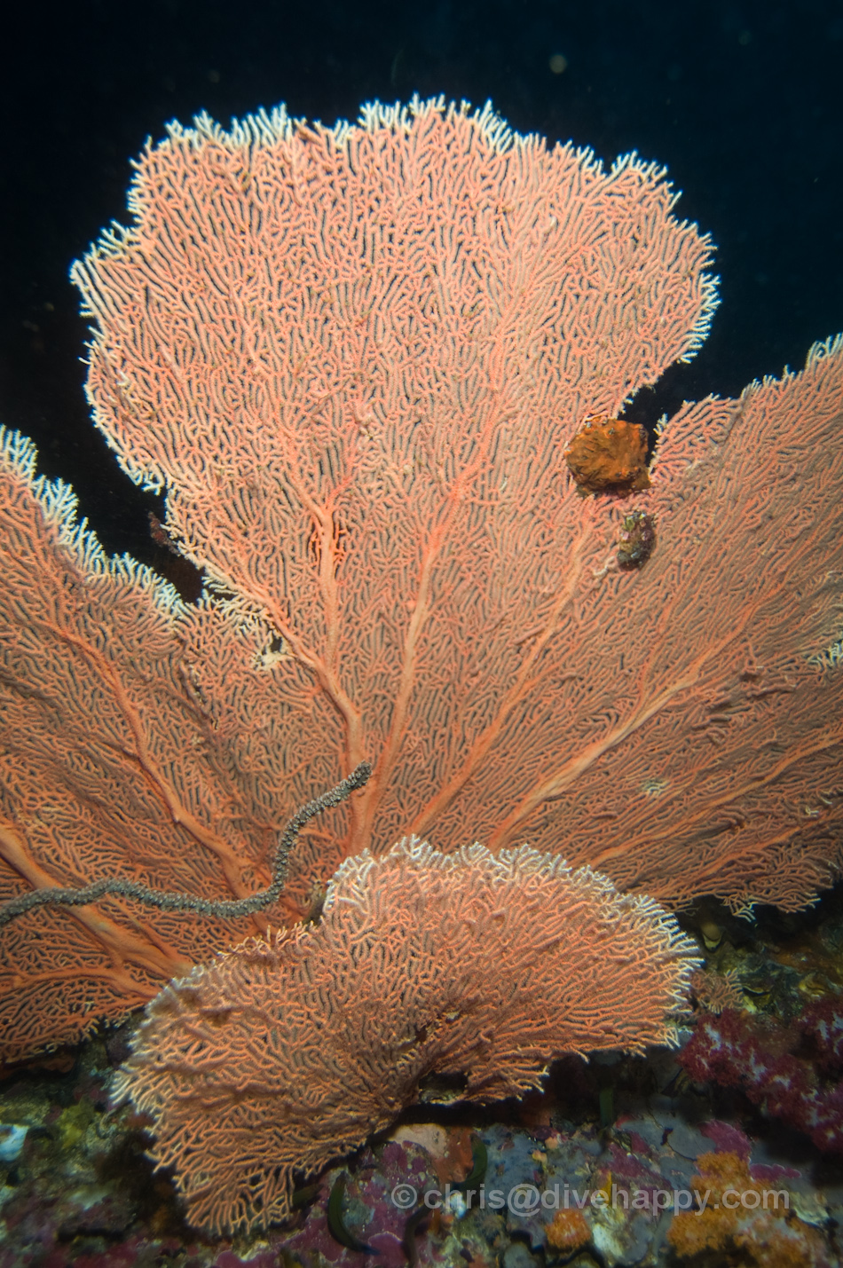 Fan Corals -Diving Burma