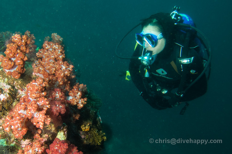 Diver with Soft Corals, Burma
