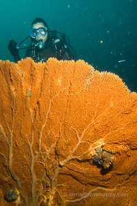 Fan Corals, Fan Forest Pinnacle, Burma