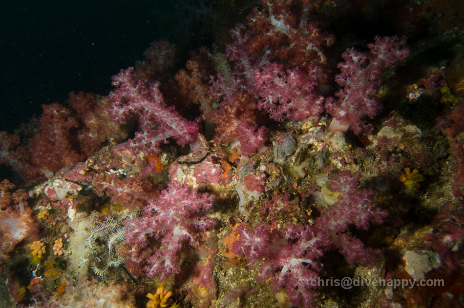 Soft Corals - Diving Burma
