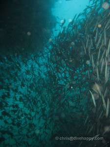 Bait ball of schooling fish, In Through The Out Door, Burma