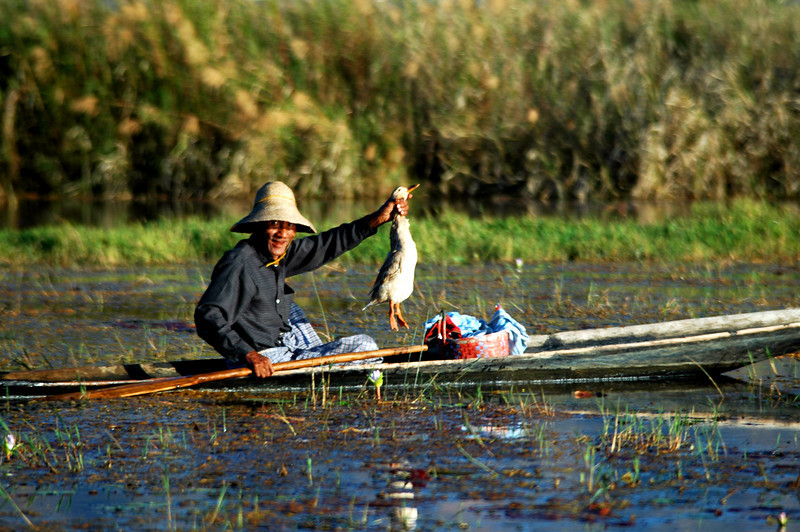 Duck Soup - Inle