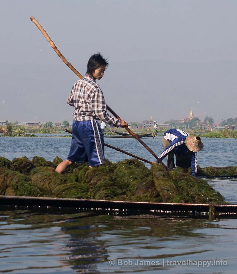 """Seaweed farmers"" scoop up weeds and plants growing below the surface of Inle Lake near Nyaungshwe"