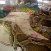 118-Year-Old Snake