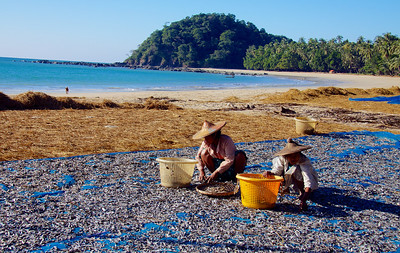 Beach Area and Women Sorting Dried Fish