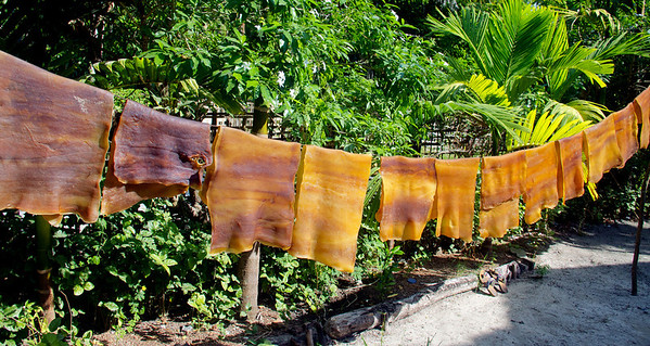 Latex Rubber Sheets Drying