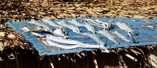 Fish Drying on a Hut's Roof
