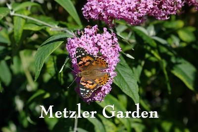 Metzler Garden