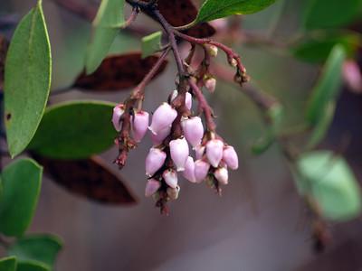 Flower at Burney Falls
