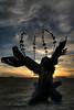 Burning Man 2008 3 11201