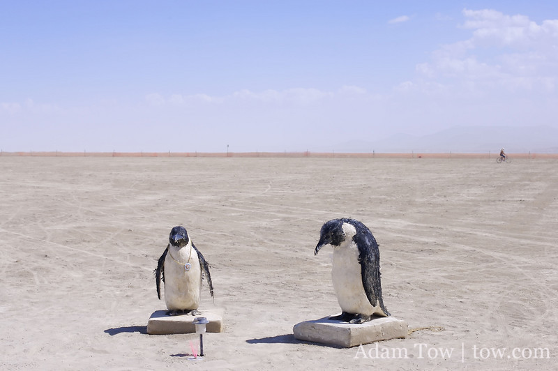 No icebergs for these penguins