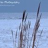 """Winter Sea Grass by Lora Mosier<br /> <br /> This sea grass refuses to take it lying down!  <br /> <br /> And the lake is not quite all the way frozen, if you look waaaaaaaaaay out there.  <br /> <br />  <a href=""""http://www.burningriverboutique.com"""">http://www.burningriverboutique.com</a>"""