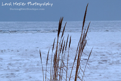 Winter Sea Grass by Lora Mosier  This sea grass refuses to take it lying down!    And the lake is not quite all the way frozen, if you look waaaaaaaaaay out there.    www.burningriverboutique.com