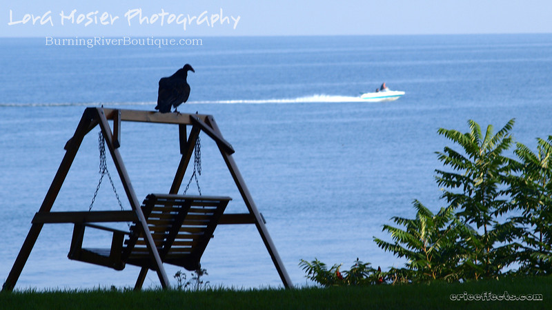 A Buzzard is Two Faced by Lora Mosier<br /> <br /> Okay, so I stole the title from Bugs Bunny...but it fits.  This guy looked over at me and then decided that the passing boat was a much more interesting sight.