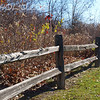 "Fencing by Lora Mosier<br /> <br /> The few bright red leaves that are still hanging on add just the right touch of accent color to this fall scene.<br /> <br /> This picture was taken before a 15 mile bike ride (notice it was before...don't think I would have had the energy after).<br /> <br />  <a href=""http://www.burningriverboutique.com"">http://www.burningriverboutique.com</a>"