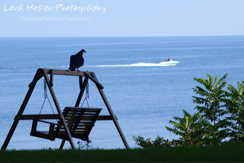 """A Buzzard is Two Faced by Lora Mosier<br /> <br /> The title is for all you Bugs Bunny fans...I know you're singing the song.<br /> <br /> Apparently, this buzzard was more interested in the boaters than in me taking his picture.  <br /> <br /> He stayed perched on the top of the swing frame for just a wee bit of time after the boat went by before taking off...guess he had to make his way to Hinckley (although he would have been quite late in getting there).<br /> <br />  <a href=""""http://www.burningriverboutique.com"""">http://www.burningriverboutique.com</a>"""