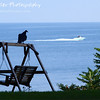"A Buzzard is Two Faced by Lora Mosier<br /> <br /> The title is for all you Bugs Bunny fans...I know you're singing the song.<br /> <br /> Apparently, this buzzard was more interested in the boaters than in me taking his picture.  <br /> <br /> He stayed perched on the top of the swing frame for just a wee bit of time after the boat went by before taking off...guess he had to make his way to Hinckley (although he would have been quite late in getting there).<br /> <br />  <a href=""http://www.burningriverboutique.com"">http://www.burningriverboutique.com</a>"