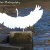 """Crane Landing by Lora Mosier<br /> <br /> Just touching down after a brief flight.<br /> <br />  <a href=""""http://www.burningriverboutique.com"""">http://www.burningriverboutique.com</a>"""