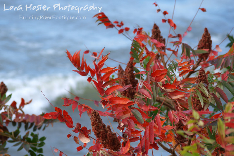 "Red's Reds by Lora Mosier<br /> <br /> This was taken in our backyard with a wave on Lake Erie as the backdrop.<br /> <br />  <a href=""http://www.burningriverboutique.com"">http://www.burningriverboutique.com</a>"