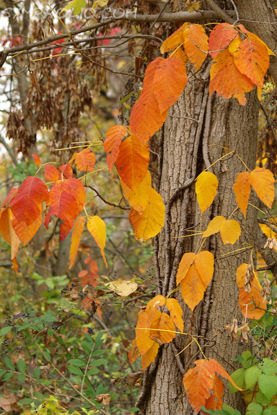 "Leave it to Change by Lora Mosier<br /> <br /> We found this tree across from the train station in Peninsula, Ohio after riding the Cuyahoga Valley Scenic Railroad.  What a nice greeting!<br /> <br /> <br />  <a href=""http://www.burningriverboutique.com"">http://www.burningriverboutique.com</a>"
