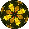 Bee Meri(gold)