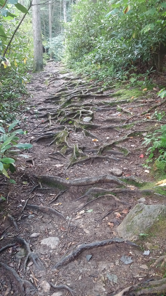 The walking trail got a bit more treacherous closer to the waterfall.