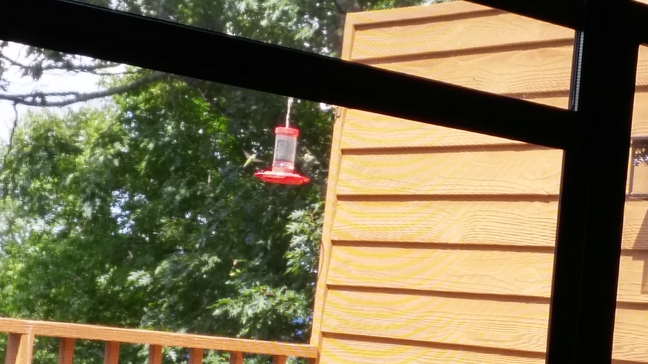 View of the hummingbirds from the living room.