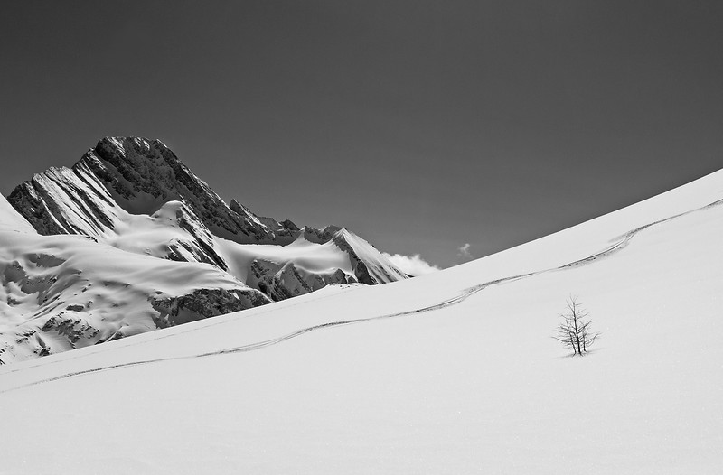 Lunch over, skins off, and some decent turns in the 10 cm of powder over a rock hard crust in the alpine.