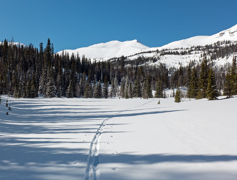 Swinging wide across the upper meadows, to gain a little more distance from the  avalanche paths below the Snow Peak cornices.