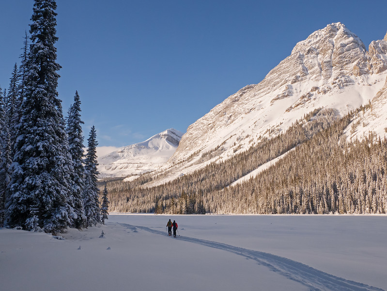 Heading for the sun on the Burstall flats, on a snowmobile track that led all the way to the forested headwall.