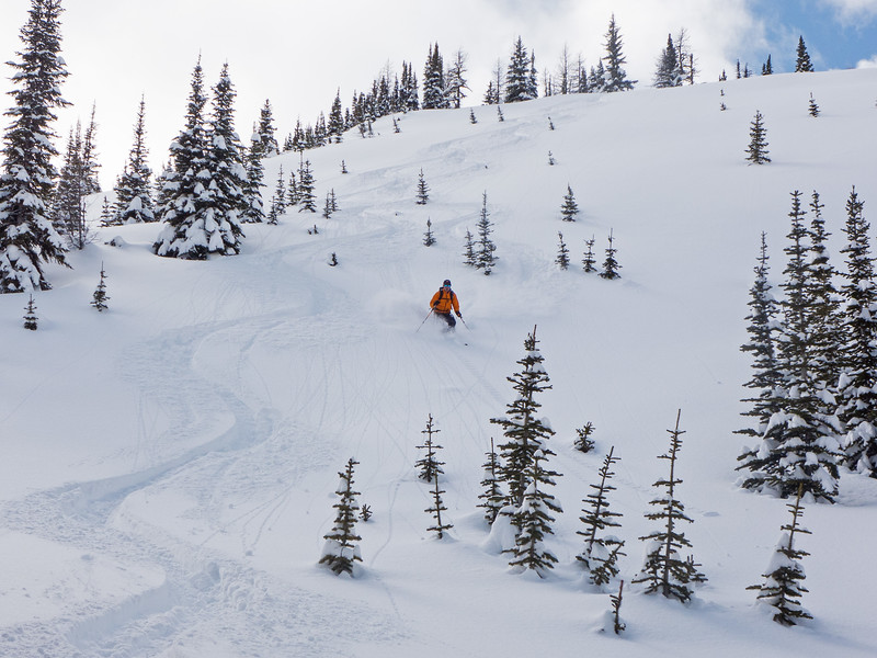 The skiing was very good in the alpine, with a bit of wind and solar effect, but our best local turns of the season were found in the sheltered treeline glades. Probing above this zone in the larches revealed a deep snowpack (for Kananaskis) of 270 cm, but also easily identified the totally faceted  lower half, where the probe encountered almost no resistance.