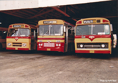 LtoR m/o 181 Leyland Worldmaster ('57)/Smithfield (11/73), m/o 4124 Leyland Worldmaster ('58)/Smithfield (9/77), m/o 5497 Leyland Olympic/CVI (11/69) Photo taken at Northmead Depot in 1983. (Image from the Peter Reid Collection)