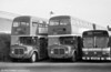 AEC Regent V/Willowbrook  H39/32F 853 (436 HCY) and Park Royal bodied 596 (429 HCY) at Ravenhill.