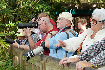 Bush Gardens Overnight With Photo Experience – January 2012 Photo Experience, James Corwin Johnson, Sarasota Florida
