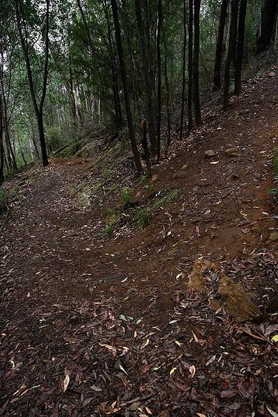 Rollasons Falls Track