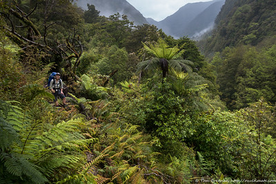 Emerging from the jungle on a rough section of track