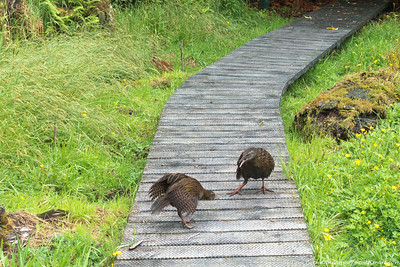 Weka fight 2