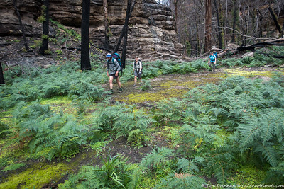 Heading up a branch of Little Capertee Creek to the tops