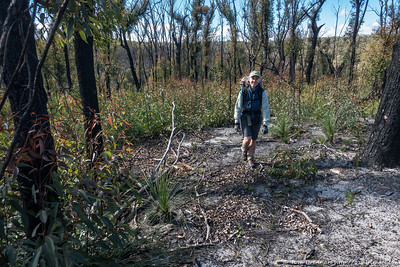 Heading along a ridge of burnt but quickly recovering bush
