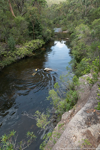 Alex swimming up Kangaroo Creek