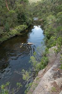 Alex swimming up Kangaroo Creek