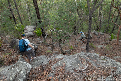 Descending off track from the ridge to Engadine Creek