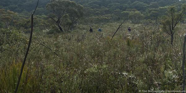 Crossing low heath
