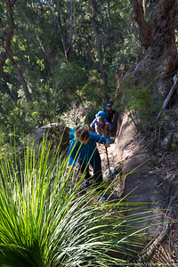 A little detour between the Blue Gum Swamp Track and the Shaws Ridge Trail