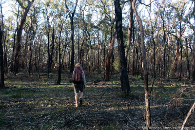 Walking throuhg open bush - not all of it was this nice!
