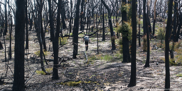Easy walking through burnt bush on the Great Divide