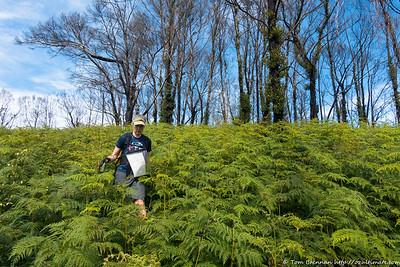 Rachel descending through ferns