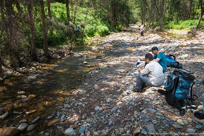 Breakfast Creek in healthy flow